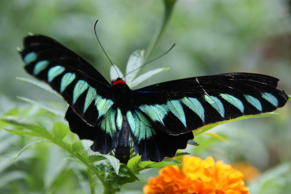 Im Butterfly Garden