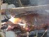 Spanferkel (eher -schwein)