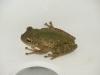 15 Frosch im Bad