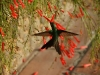 07 Kolibri